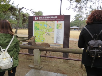 THIS deer is going to tell us how to get to the Todaiji