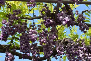 Gra-- flowers!!